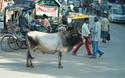 ผู้ยิ่งใหญ่แห่งอินเดีย                  โดย อึ้งเข่งสุง