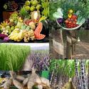 ดินเลว โรคพืชระบาดได้ง่าย