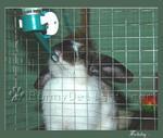 การให้น้ำกระต่ายอย่างถูกต้อง
