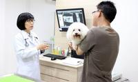 โรคลิ้นหัวใจรั่วในสุนัข