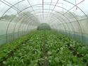 เกษตรอินทรีย์รองรับ AEC