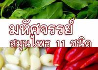 มหัศจรรย์สมุนไพรไทย 11 ชนิด