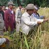 โครงการนำร่องปลูกข้าวไร่ ในพื้นที่อำเภอฉวาง ประสบความสำเร็จ จากเดิมมีเกษตรกรปลูกข้าว  20  กว่ารายหลังเริ่มโครงการ 1 สัปดาห์เพิ่มขึ้นเป็น  400 ราย