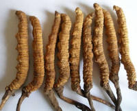 ถั่งเช่า (Cordyceps) มีประโยชน์อย่างไร