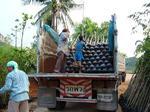 ส่งไม้ที่จังหวัดอุตรดิตถ์ (ต้นคูน 1200 ต้น)