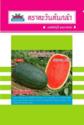 """hạt giống dưa hấu F1 Thái Lan chất lượng cao (Watermelon Seed) """"Super Jet"""""""