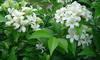 ขายหัวน้ำหอมกลิ่นดอกแก้ว  ขายน้ำหอมกลิ่นดอกแก้ว Sell dokkaew fragrance