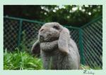 กระต่ายคืออะไร