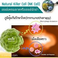NK Cell นักฆ่าผู้ไม่ปราณีต่อมะเร็ง หรือเซลล์ติดเชื้อ