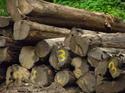 Save the forest green: เรื่องแก้ไขเพิ่มเติมกฎหมายป่าไม้