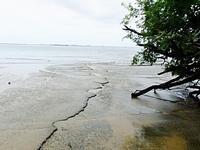 สุสานหอย 75 ล้านปี