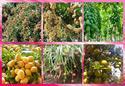 ดิน-น้ำ มีบทบาทสำคัญต่อการเจริญเติบโตของ พืชทุกๆชนิด