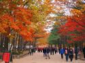 เกาหลี ซอรัคซาน เกาะนามิ ช่วงใบไม้เปลี่ยนสี  5 วัน 3 คืน  ราคาเริ่มเพียง  15,900 บาท