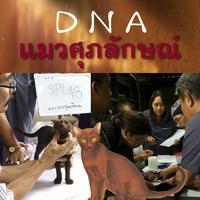 DNA แมวศุภลักษณ์
