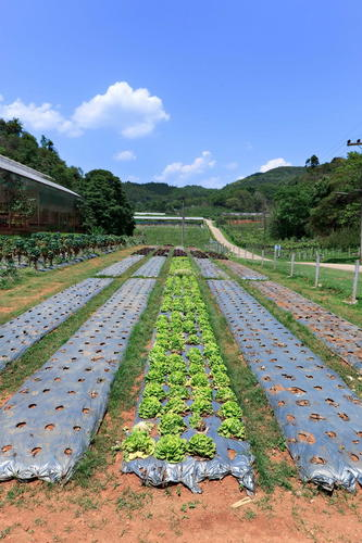 4.Doi Angkhang Farm (600X900)