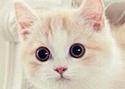 แมว: จำเลยโรคท็อกโซพลาสโมซิส ?