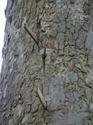ทอย หรือลูกทอย: ภูมิปัญญาท้องถิ่นของพรานป่า  โดย มณี บันลือ เรื่อง/ภาพ-ธงชัย เปาอินทร์