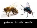 คิดแบบ �ผึ้ง� หรือว่า �แมลงวัน�