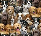 ผ้าคอตตอนอเมริกา รูปน้องหมา ขนาด 1/4 หลา