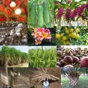 คืนธรรมชาติสู่แผ่นดิน ด้วย �กรดอินทรีย์� คุมเชื้อราฆ่าเชื้อโรค ในดิน ในน้ำ ในพืช  ในลำไส้สัตว์ และ สิ่งแวดล้อมที่เน่าเหม็น