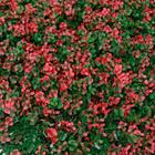 Artificial Fence รั้วต้นไม้เทียม ติดผนัง กำแพง ขนาด 1x1 m. สีเขียว แดง (DF-06059) ราคา 1,200 บาท