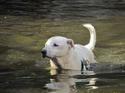 ผลกระทบจากน้ำท่วม.. ที่ต้องจำทนกันไป