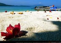 เที่ยวเกาะรังใหญ่(เต็มวัน)