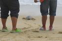 #ปักษ์ใต้ ปักหมุดหยุดเวลา@พังงา  ตอน3.ผักปลอดสารพิษ พายเรือคายัค ส้มตำสาหร่ายเม็ดพริกไทยและปล่อยเต่าทะเล  #Phangnga