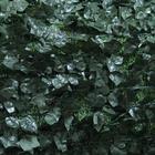 Artificial Fence รั้วตาข่ายเทียม 1x3m ใบตำลึง สีเขียวเข้ม (MZ183005A) ราคา 1,200 บาท
