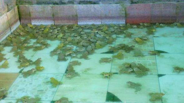 ลูกกบ ลูกปลาดุก ฟาร์มกบ ฟาร์มปลาดุก