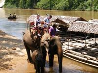 เที่ยวปางช้าง ชมการแสดงต่างๆมากมายของบรรดาช้างแสนรู้