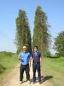 ต้นไม้ยูคาลิปตัส ต้นไม้สะสมทรัพย์