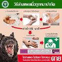 แนวทางการป้องกัน โรคพิษสุนัขบ้า