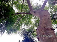 ต้นไม้ในป่า3
