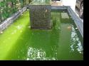 วิธีเเก้ปัญหา ตะไคร่ น้ำเขียว เบื้องต้นสำหรับตู้เเละบ่อปลา