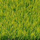 ขาย หญ้าเทียม ปูพื้น ทุ่งหญ้าเหลืองอร่าม SAVANNA ความสูง 2.5 ซม.  (2.5S เหลืองอร่าม) ราคาโปรโมชั่น 350 บาท/ตรม.