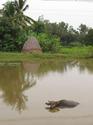 ลอมฟาง  อีกภูมิปัญญาและวิถีชีวิตไทย โดยธงชัย เปาอินทร์ เรื่อง-ภาพ