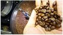 การเก็บรักษา เมล็ดกาแฟ
