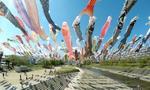 ตะลึงกับความงามของธงปลาคาร์ฟกว่า 1,000 ตัวได้ที่โอซาก้า