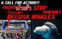 แนนซี่ กิ้บสัน แถลงข่าว เรื่องปลาวาฬ( WILD-CAUGHT BELUGA WHALES )