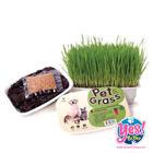 Pet Grass หญ้าปลูก ข้าวสาลี ชุดปลูกต้นข้าวสาลีอ่อนออร์แกนิค สำหรับสุนัข แมวและสัตว์เลี้ยง
