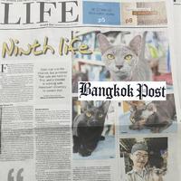 แมวไทย บางกอกโพสต์
