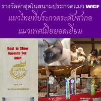 งานประกวดแมว WCF Worldshow 2016