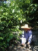 ต้นไม้พื้นบ้านทางใต้ ที่อุดมด้วยคุณค่าทางโภชนาการ และน่าจะปลูกได้ทุกที่