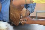 เทศบาลเมืองลัดหลวงปฏิบัติงานเชิงรุก ลงพื้นที่เร่งฉีดวัคซีนป้องกันโรคพิษสุนัขบ้า