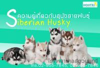 ความรู้เกี่ยวกับสุนัขสายพันธุ์  ไซบีเรียนฮัสกี้ (Siberian Husky) สำหรับผู้เลี้ยงค่ะ