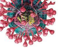 โคโรน่าไวรัส สายพันธุ์ใหม่ 2012 (Novel coronavirus)