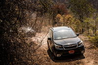 The All-New Forester