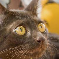 เรื่องราวแมวศุภลักษณ์ ที่แมวไทย.com