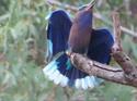 นกตะขาบทุ่ง  โดยธงชัย เปาอินทร์ เรื่อง-ภาพ